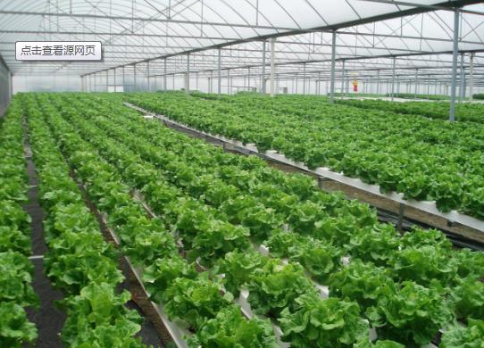 看看︰蔬菜水肥一體化技術應用