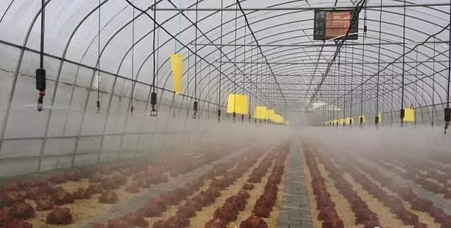 大棚水肥一體化技術如何把作用發揮到極致