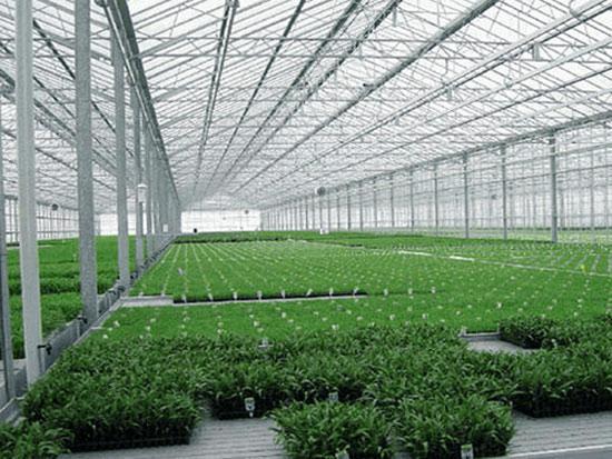 具備哪些溫室育苗設備形海内,可加快蔬菜產業現代化進程御剑术?
